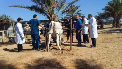 المركز الوطني للصحة الحيوانية